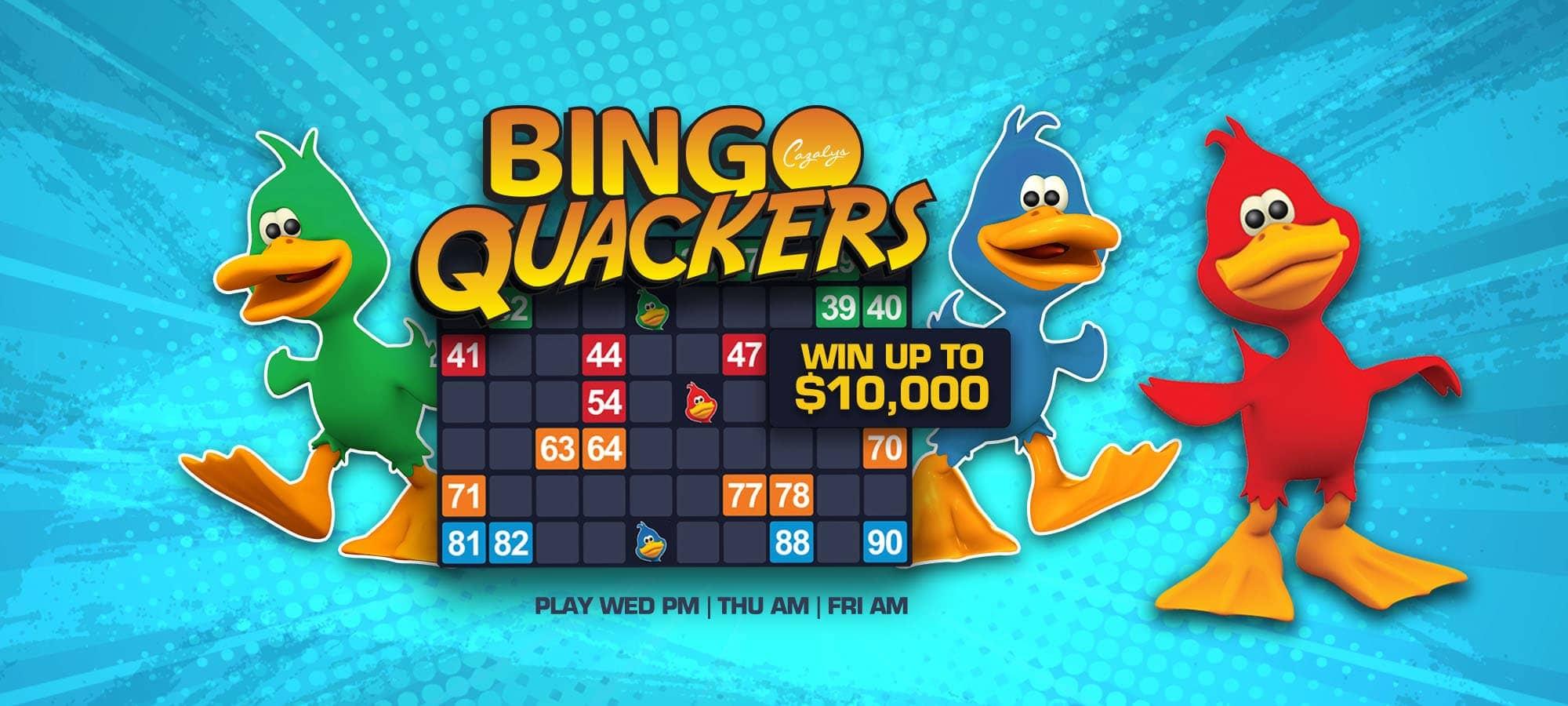 Bingo Cairns